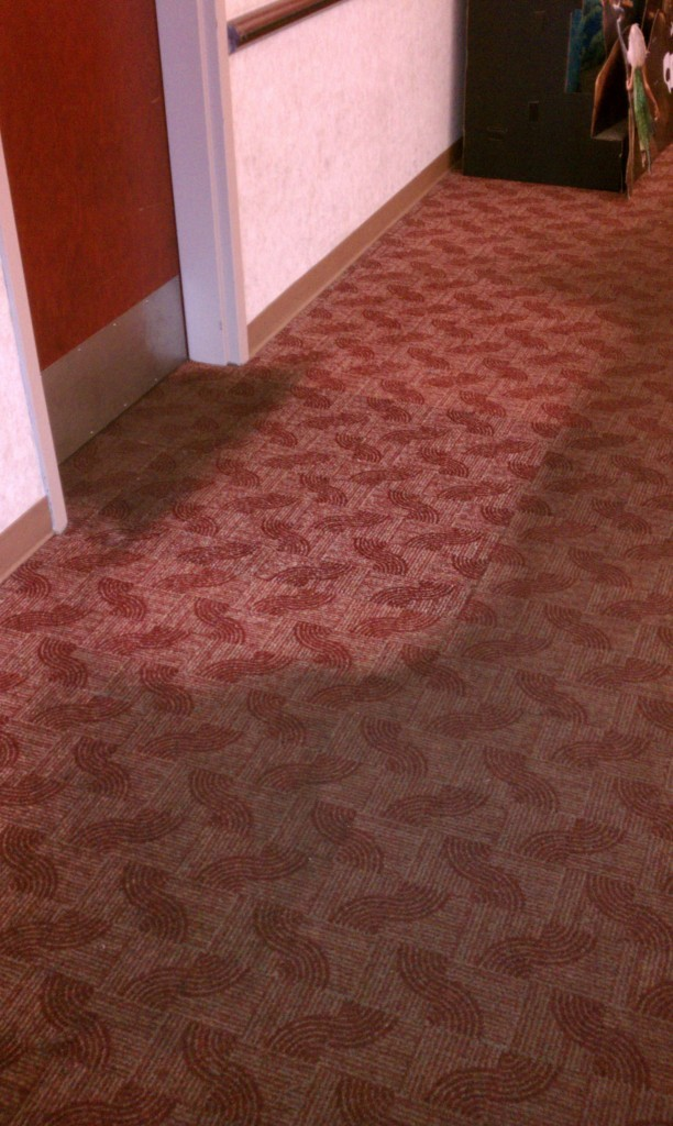 How many Times should I get my Carpet Cleaned and Why?