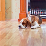 What to Know About Pet Stains and Hardwood Floors
