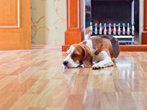 Read more about the article What to Know About Pet Stains and Hardwood Floors